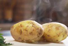 Киберпанк, который мы заслужили — анонсирована умная картошка, способная общаться
