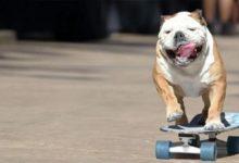 Tony Hawk's Pro Skater получит полную перезагрузку? Activision даёт новый намёк