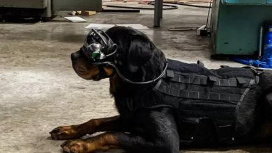 Армия США начала тестировать очки дополненной реальности для собак